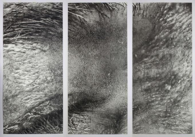 A Side Eye (2009) by Cynthia Lin