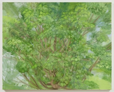 Sylvia Mangold, Maple Tree, 40 x 50