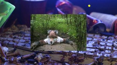 Jon Rafman »Still Life (Betamale)«, 2013