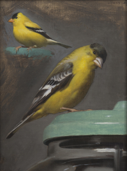 Yellow Finch Study, Oil on Linen mounted to panel, 2015, 8 x 6 inches