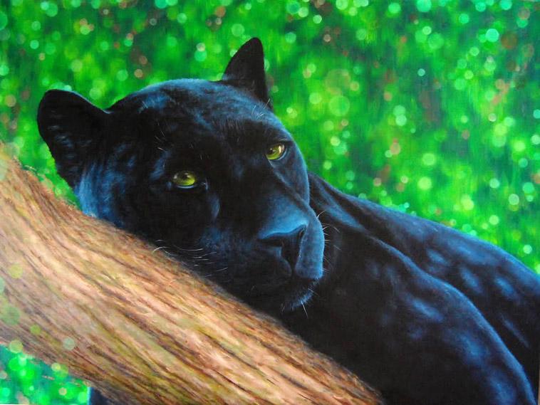 bk-foxx-panther